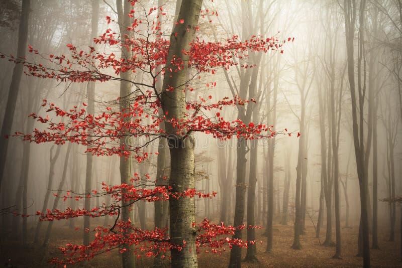 Bomen in de mist royalty-vrije stock foto
