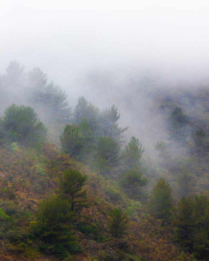 Bomen in de mist in de berg royalty-vrije stock afbeelding