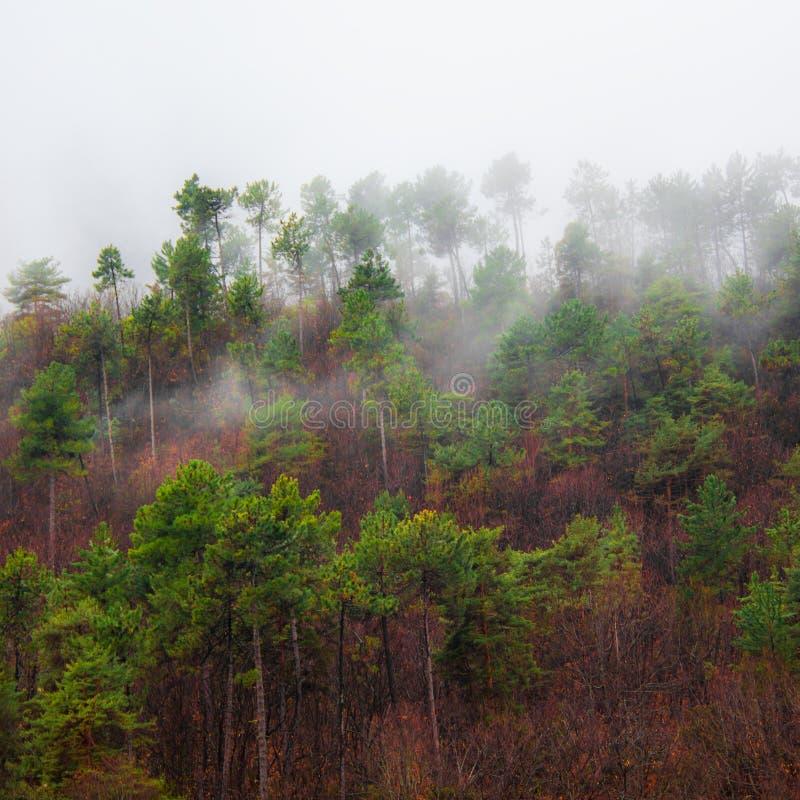Bomen in de mist in de berg stock afbeeldingen