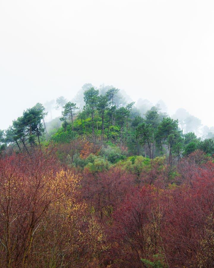 Bomen in de mist in de berg stock fotografie