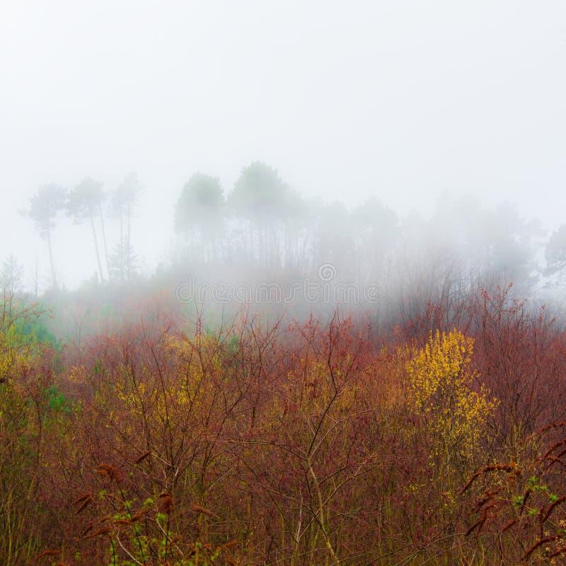 Bomen in de mist in de berg stock afbeelding