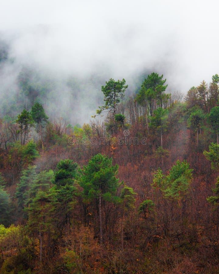 Bomen in de mist in de berg stock foto's