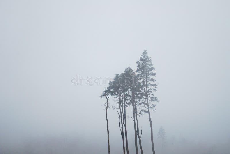 Bomen in de mist in Glendalough Ierland stock foto's