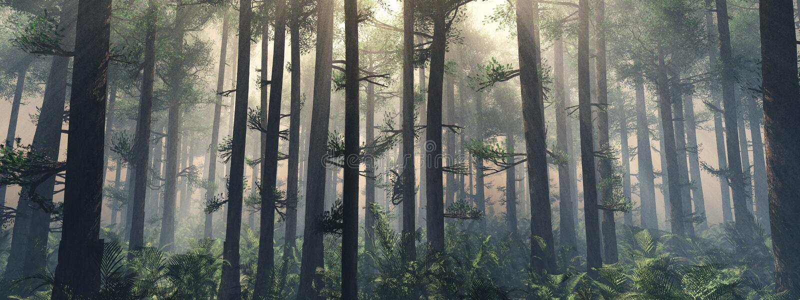 Bomen in de mist De rook in het bos stock afbeeldingen