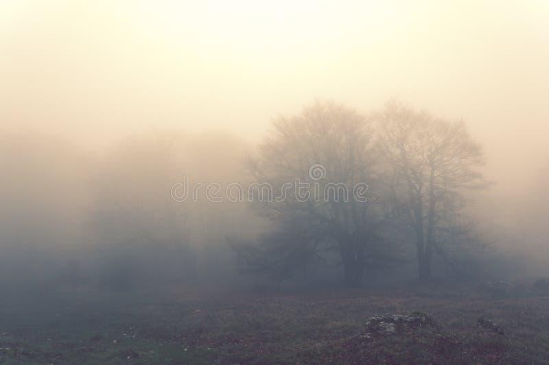 Bomen in de ochtend en het uitstekende effect royalty-vrije stock fotografie