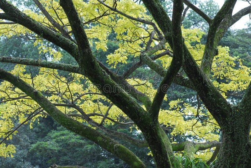 Bomen in de parken stock fotografie