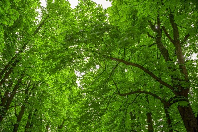 Bomen in de parkklauw, met HDR stock fotografie