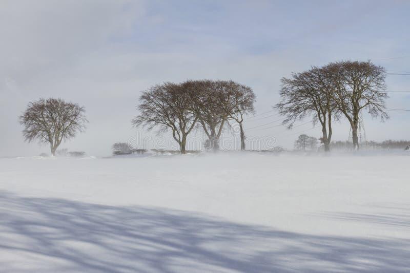 Bomen in de sneeuw stock afbeelding