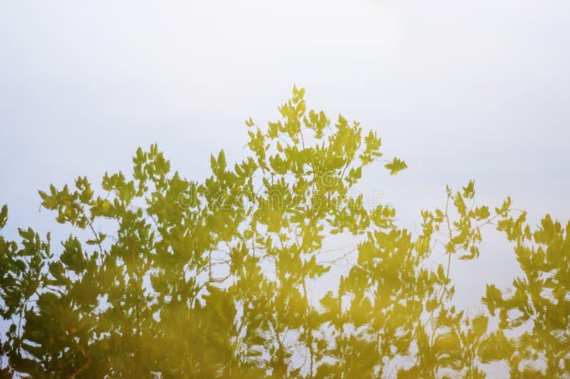 Bomen in de wateren worden weerspiegeld dat royalty-vrije stock afbeelding