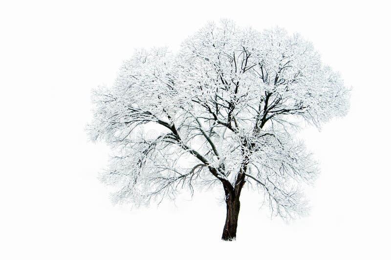 Bomen in de winter royalty-vrije stock foto