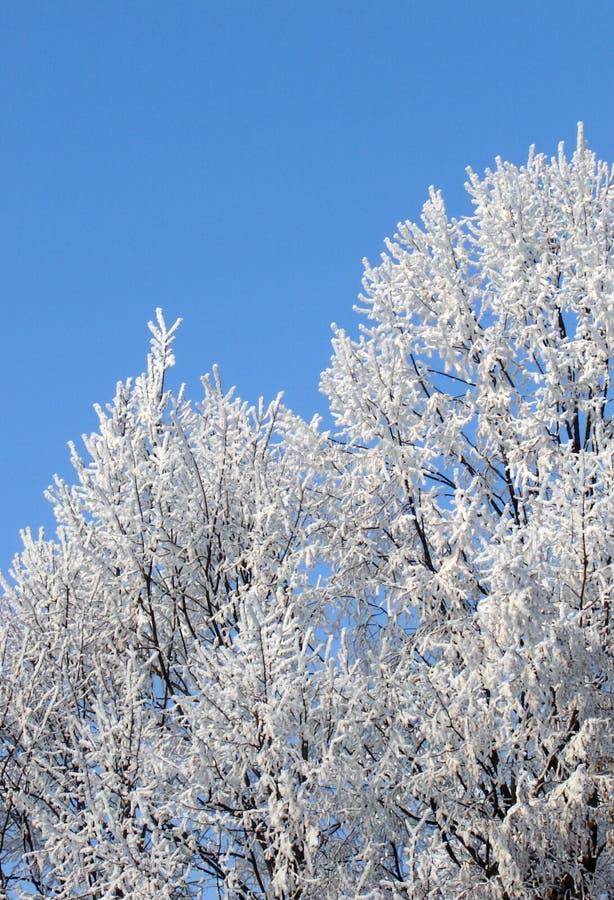 Bomen in de winter stock fotografie