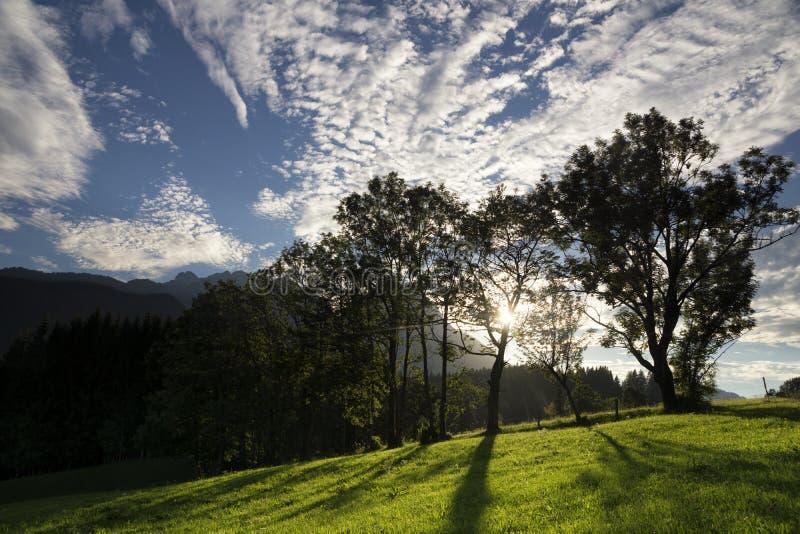 Bomen dichtbij Annaberg im Lammertal stock afbeelding