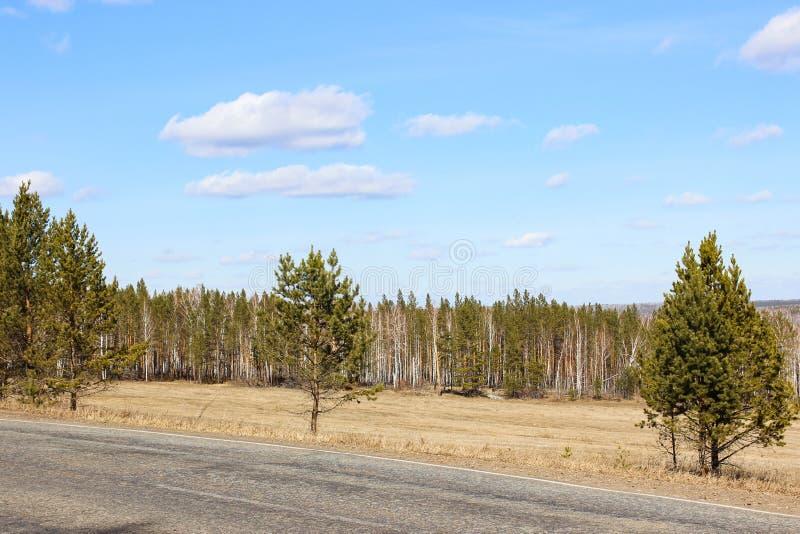 Bomen dichtbij de weg stock foto's