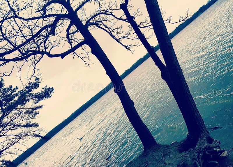 Bomen dichtbij Meer stock afbeeldingen