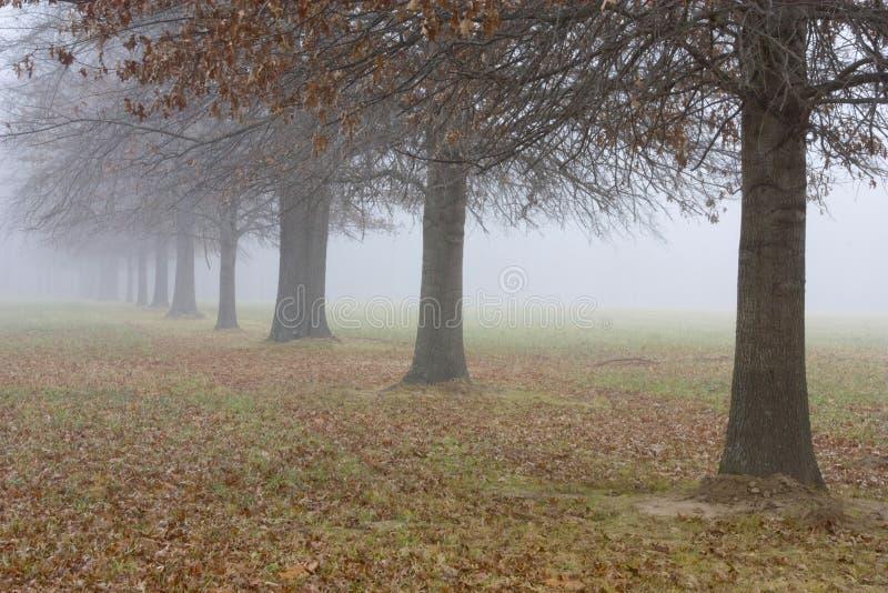 Bomen die in de Mist langzaam verdwijnen stock afbeelding