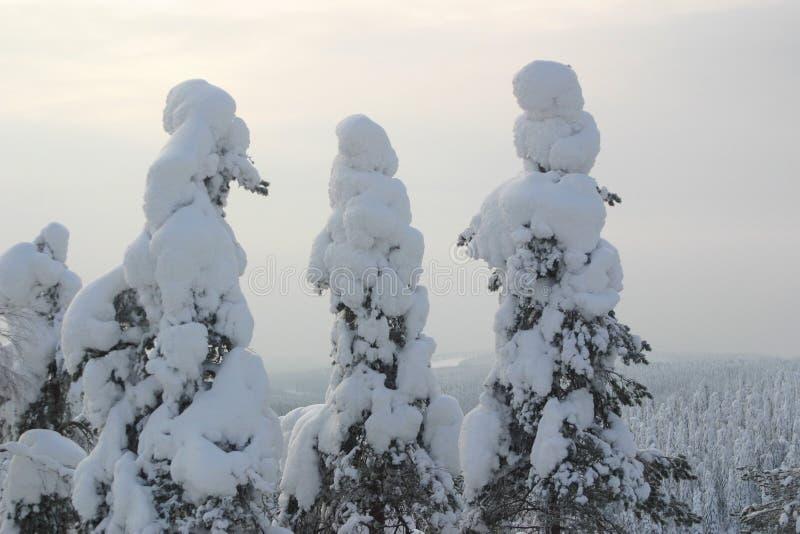 Bomen die door bevroren sneeuw worden behandeld royalty-vrije stock afbeeldingen