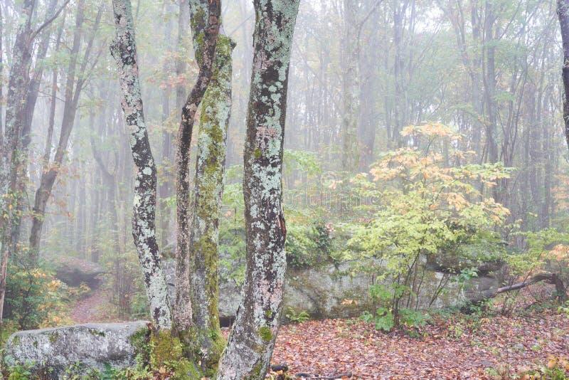 Bomen die in het Bos van Pennsylvania groeien royalty-vrije stock foto