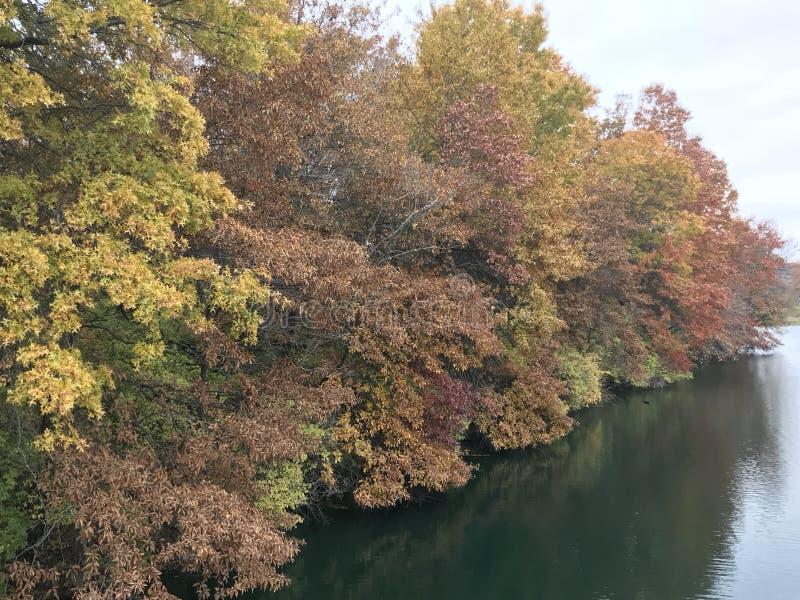 Bomen die Kleur in de Dierentuin van Kansas City veranderen stock afbeelding