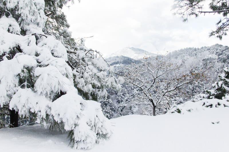 Bomen die met sneeuw worden behandeld stock foto