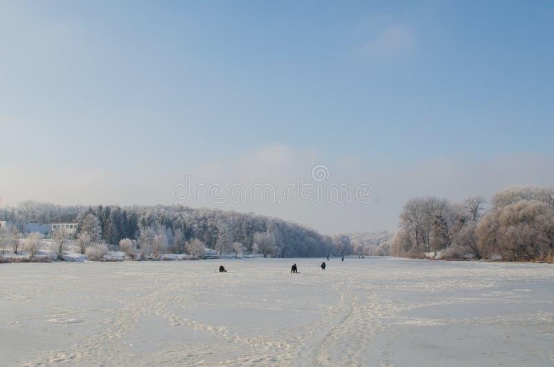 Bomen die met vorst in een sneeuwbos worden behandeld royalty-vrije stock fotografie