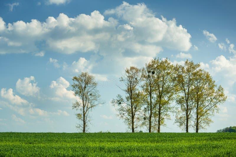 Bomen die op een groen gebied van korrel en wolken op een blauwe hemel groeien royalty-vrije stock afbeelding