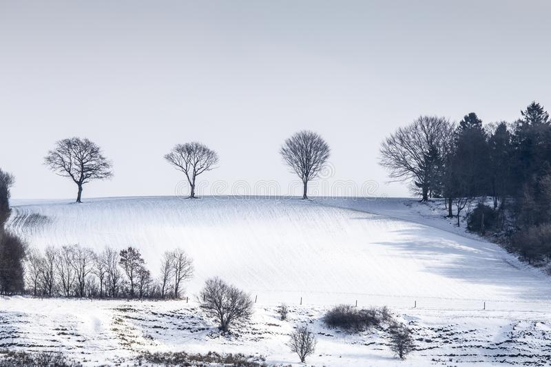 bomen die zich alleen die op helling bevinden in sneeuw in de winterlandschap wordt behandeld stock afbeelding