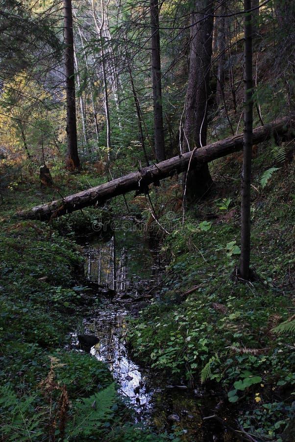 Bomen diep in het bos over de stroom stock foto's