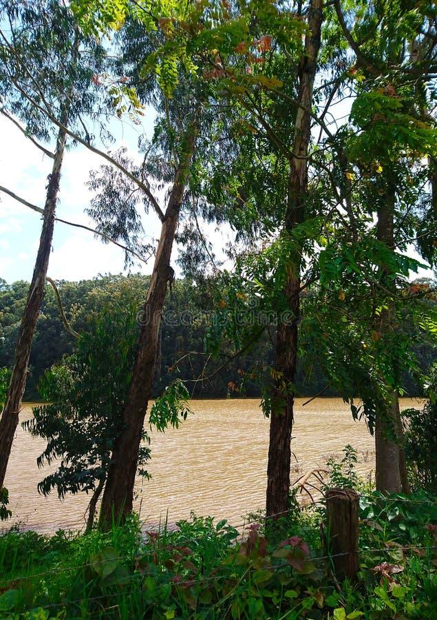 Bomen door de riviervoorzijde royalty-vrije stock fotografie