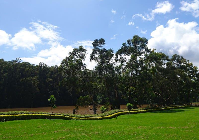 Bomen door de riviervoorzijde stock fotografie