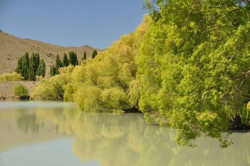 Bomen door het meer royalty-vrije stock fotografie
