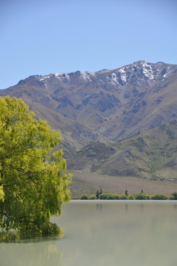Bomen door het meer royalty-vrije stock afbeelding