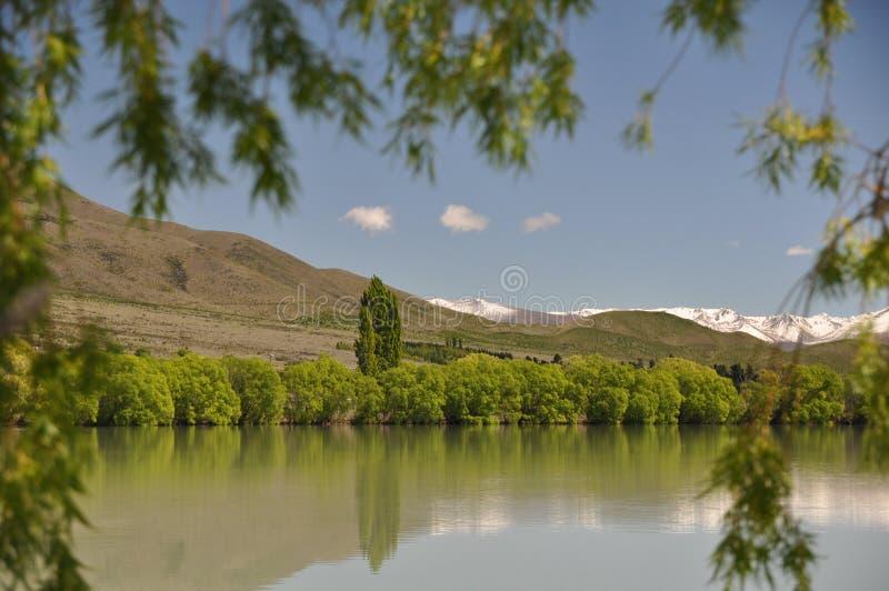 Bomen door het meer stock afbeeldingen