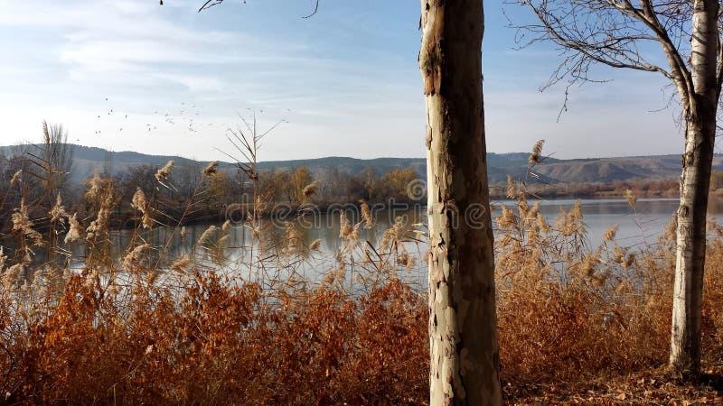 Bomen door het meer royalty-vrije stock foto