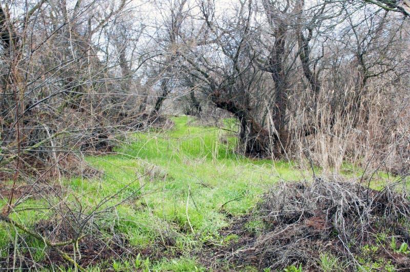Bomen in een bos stock fotografie