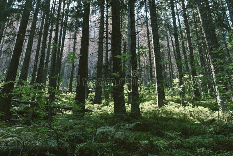 Bomen in een bos stock afbeeldingen