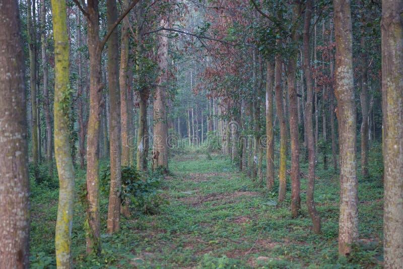 Bomen in een bos royalty-vrije stock afbeelding