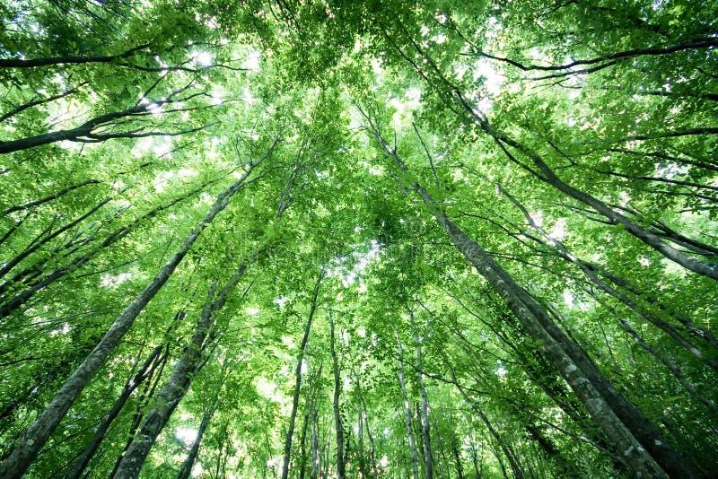 Bomen in een Forrest royalty-vrije stock afbeeldingen