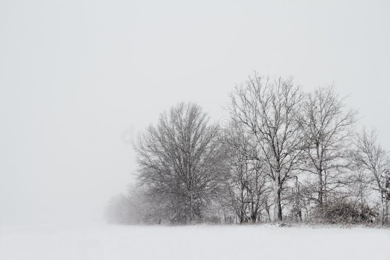 Bomen in een sneeuwonweer stock foto's