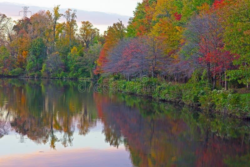 Bomen en bezinningen rond een stadsvijver in Dalingenkerk, Virginia, de V.S. stock afbeelding