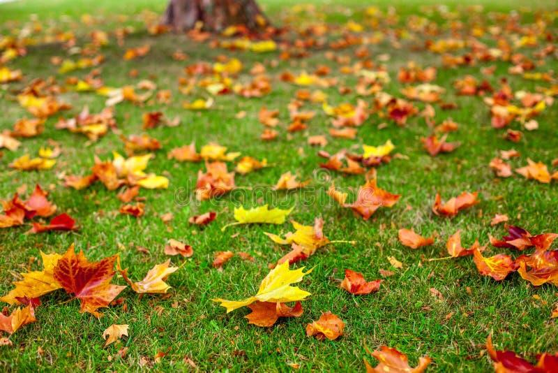 Bomen en bladeren stock fotografie