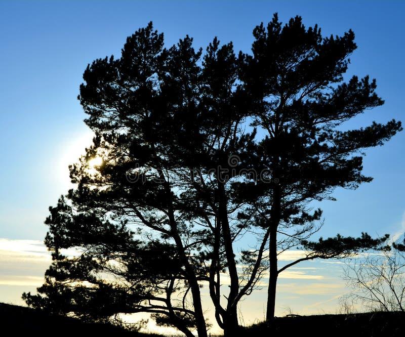 Bomen en blauwe hemel met zon dichtbij ver royalty-vrije stock foto's