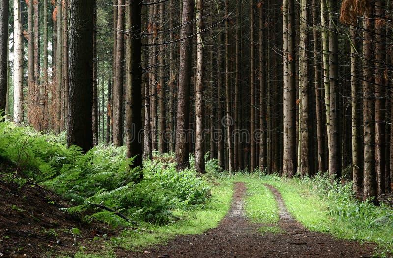 Bomen en bos royalty-vrije stock foto