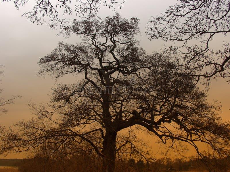 Bomen en bos royalty-vrije stock foto's