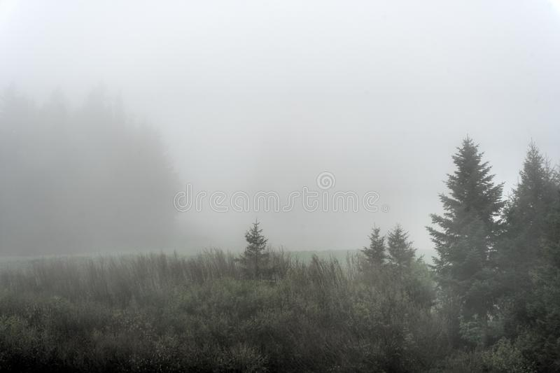 Bomen en bos in de mist en mist in de heuvels van Zwitserland royalty-vrije stock fotografie