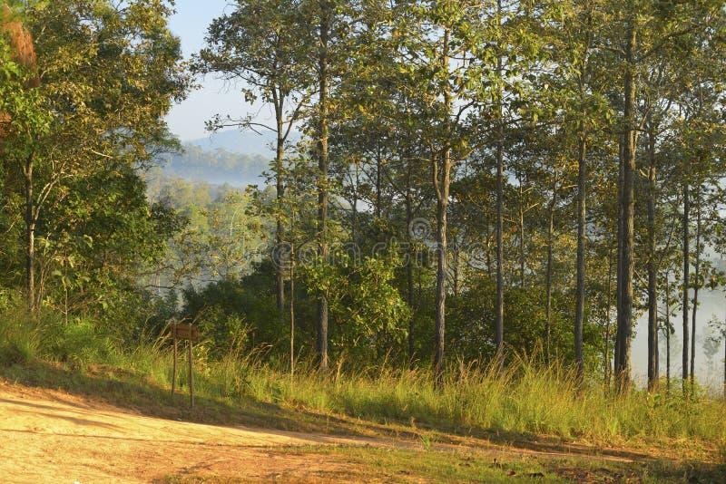 Bomen en bossen in de ochtend royalty-vrije stock afbeeldingen