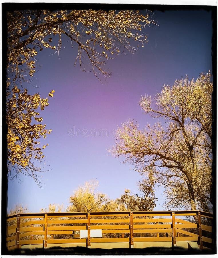 Bomen en brug stock afbeelding
