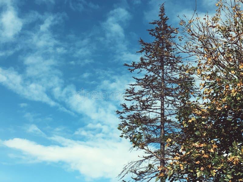 Bomen en de blauwe hemel stock afbeeldingen