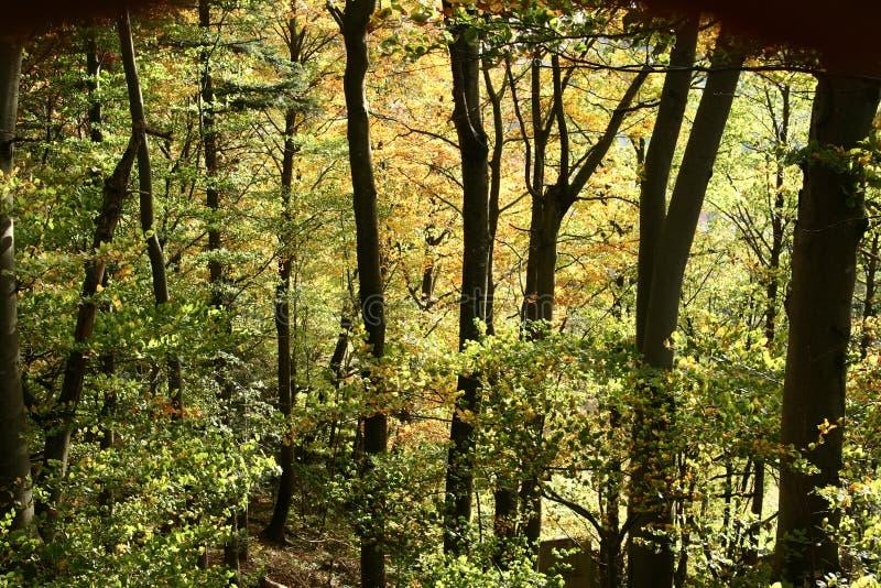 Bomen en de bosherfst royalty-vrije stock afbeelding