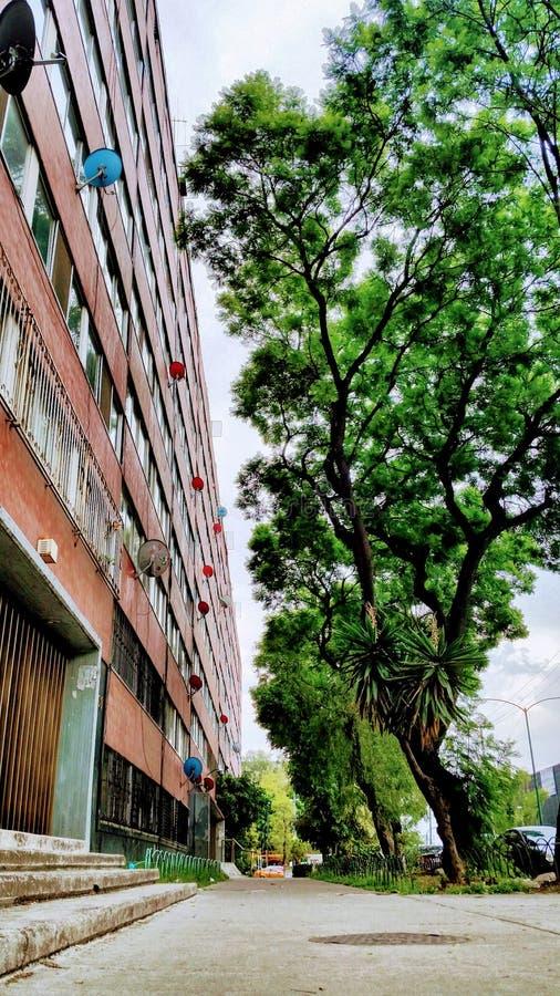 Bomen en de bouw royalty-vrije stock foto's