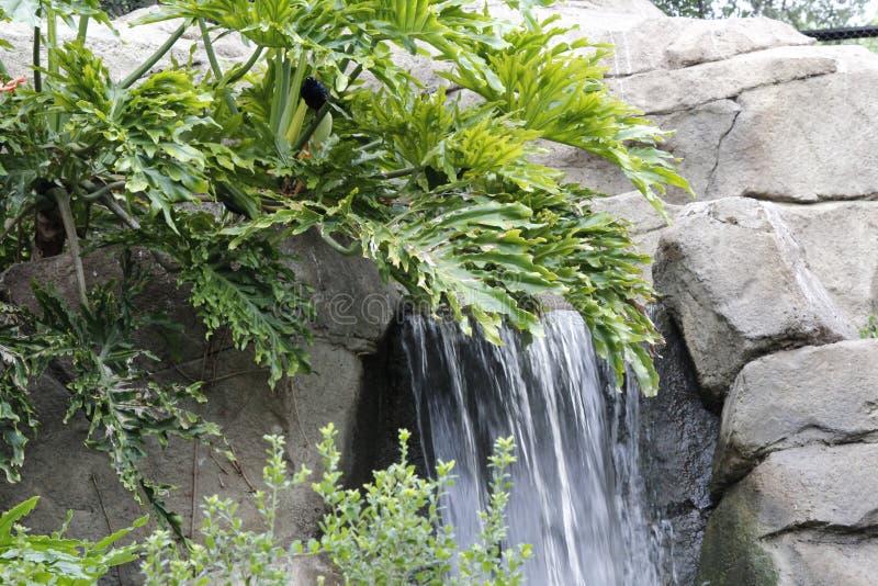 Bomen en een kleine waterval royalty-vrije stock afbeeldingen